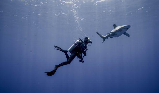 mois-aquatique-les-requins-de-la-colre-1