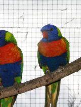 Expo-vente d'oiseaux exotiques